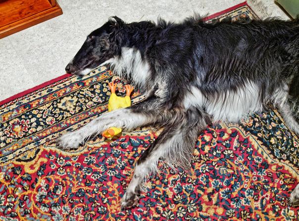 Sasha-with-toy-5.jpeg