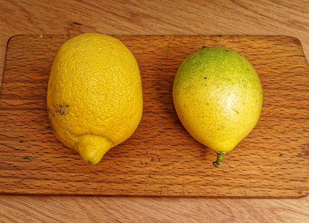 Lemon-lime-1.jpeg
