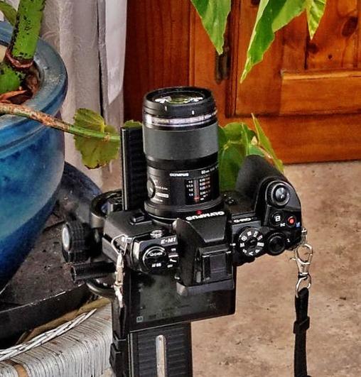 Begonia-photography-detail-2.jpeg