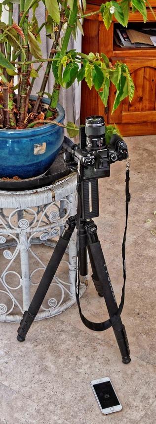 Begonia-photography-detail.jpeg