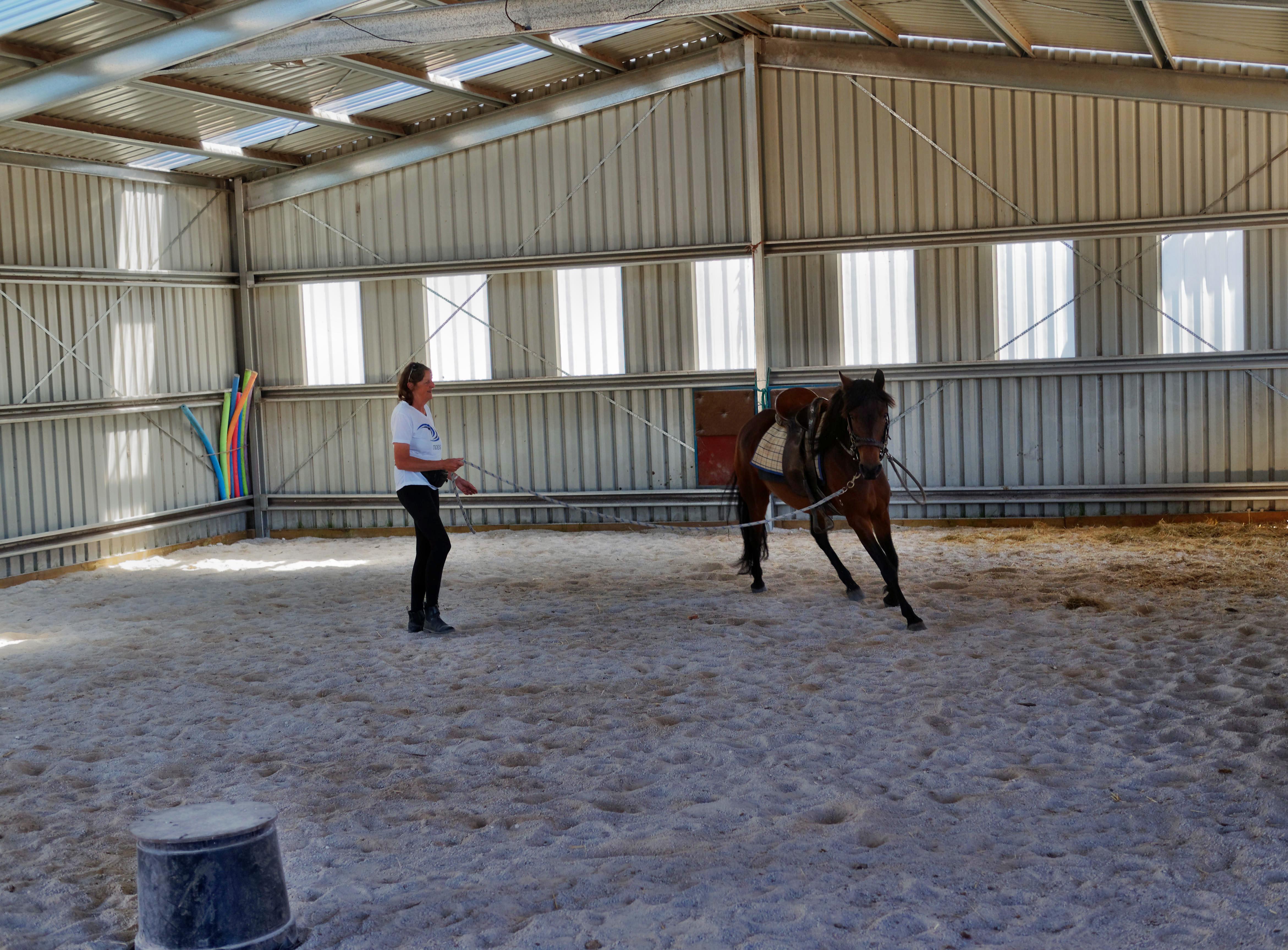 Horses-16.jpeg