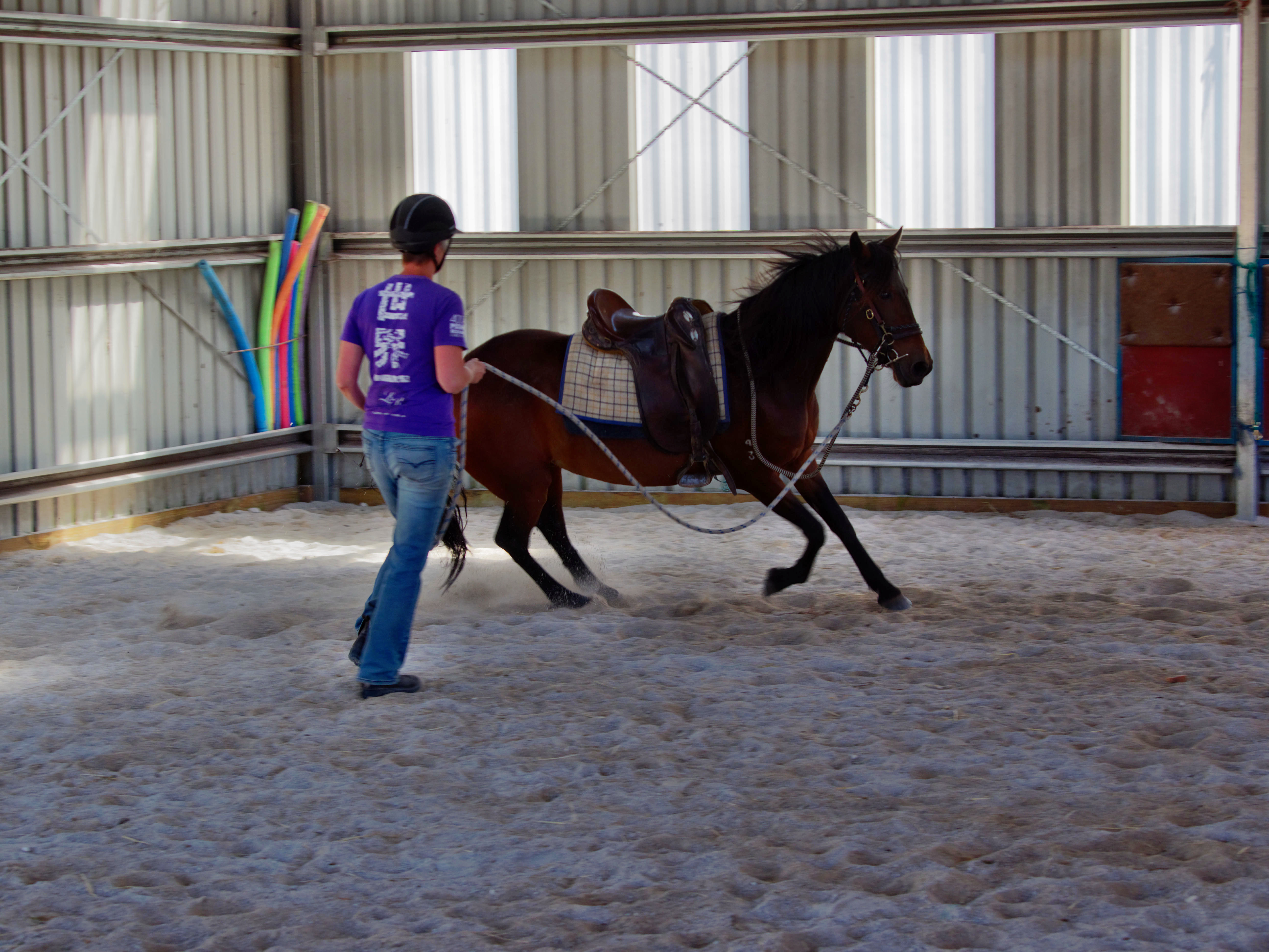 Horses-24.jpeg