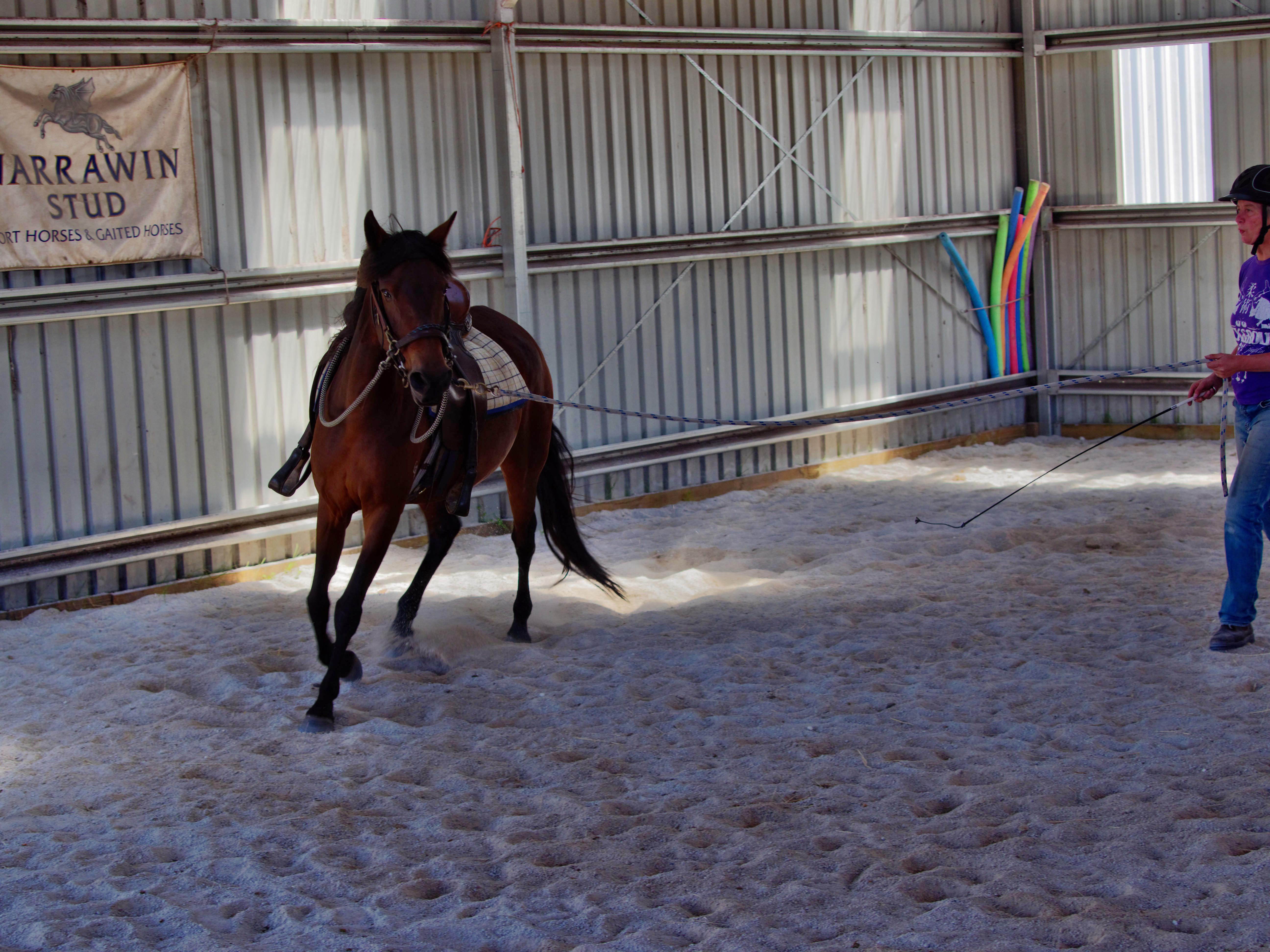 Horses-30.jpeg
