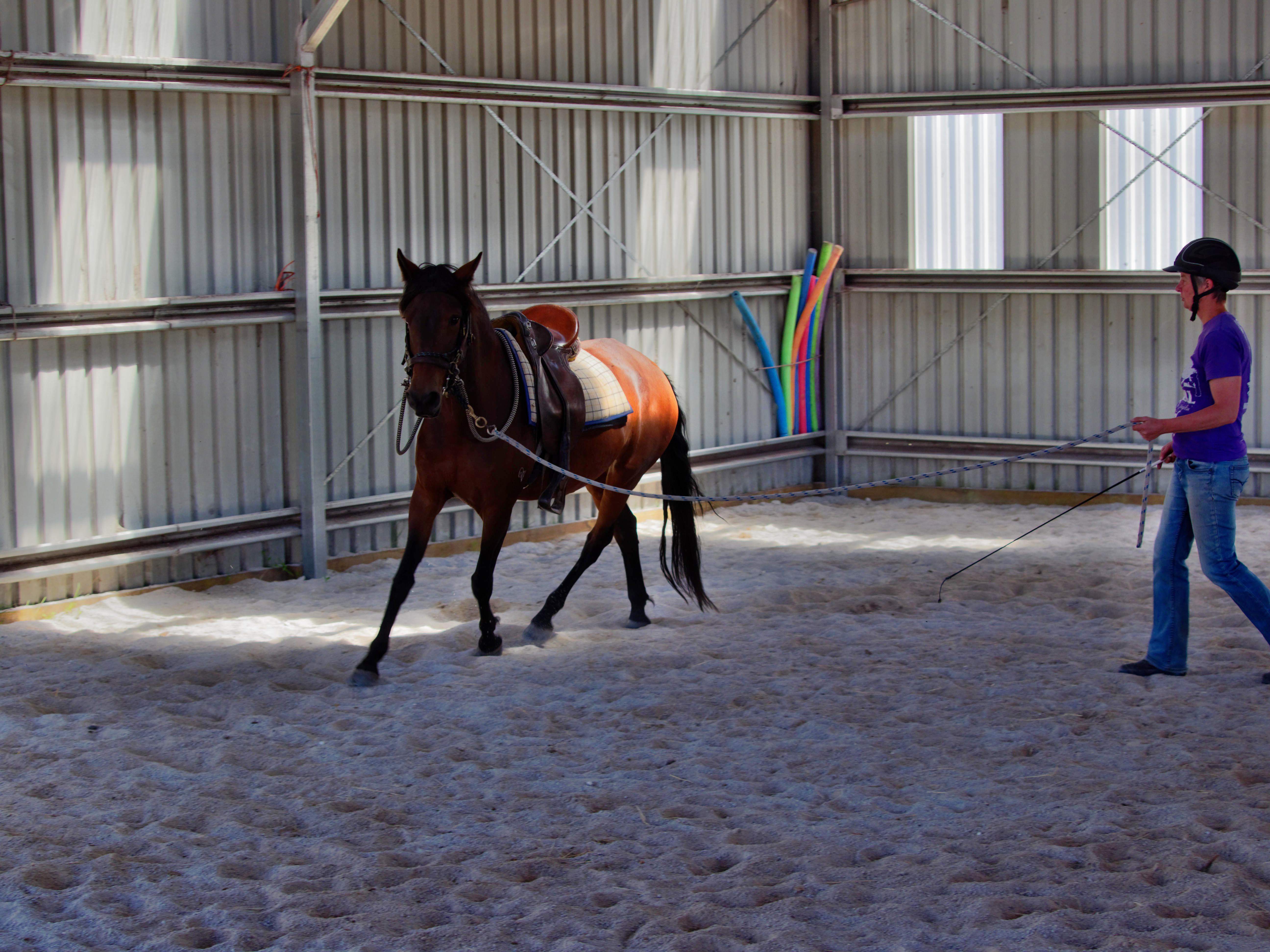 Horses-31.jpeg