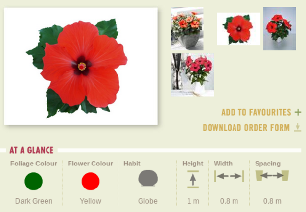 Hibiscus-colour.png
