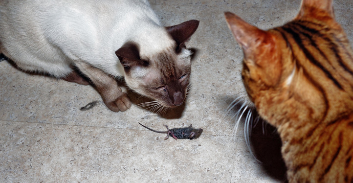 Cat-and-mouse-10.jpeg