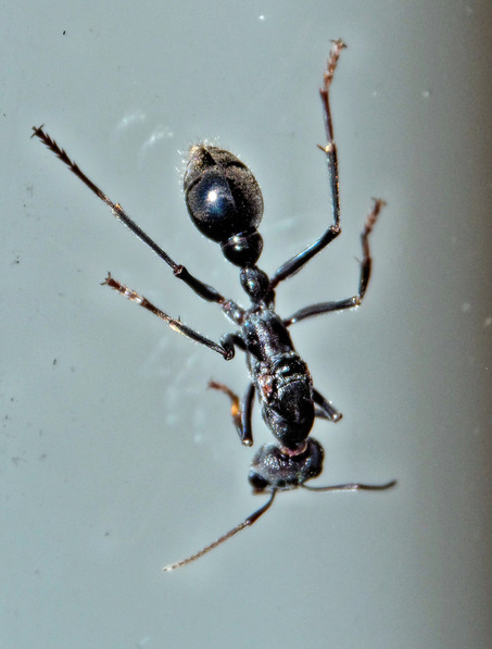 Ant-1.jpeg