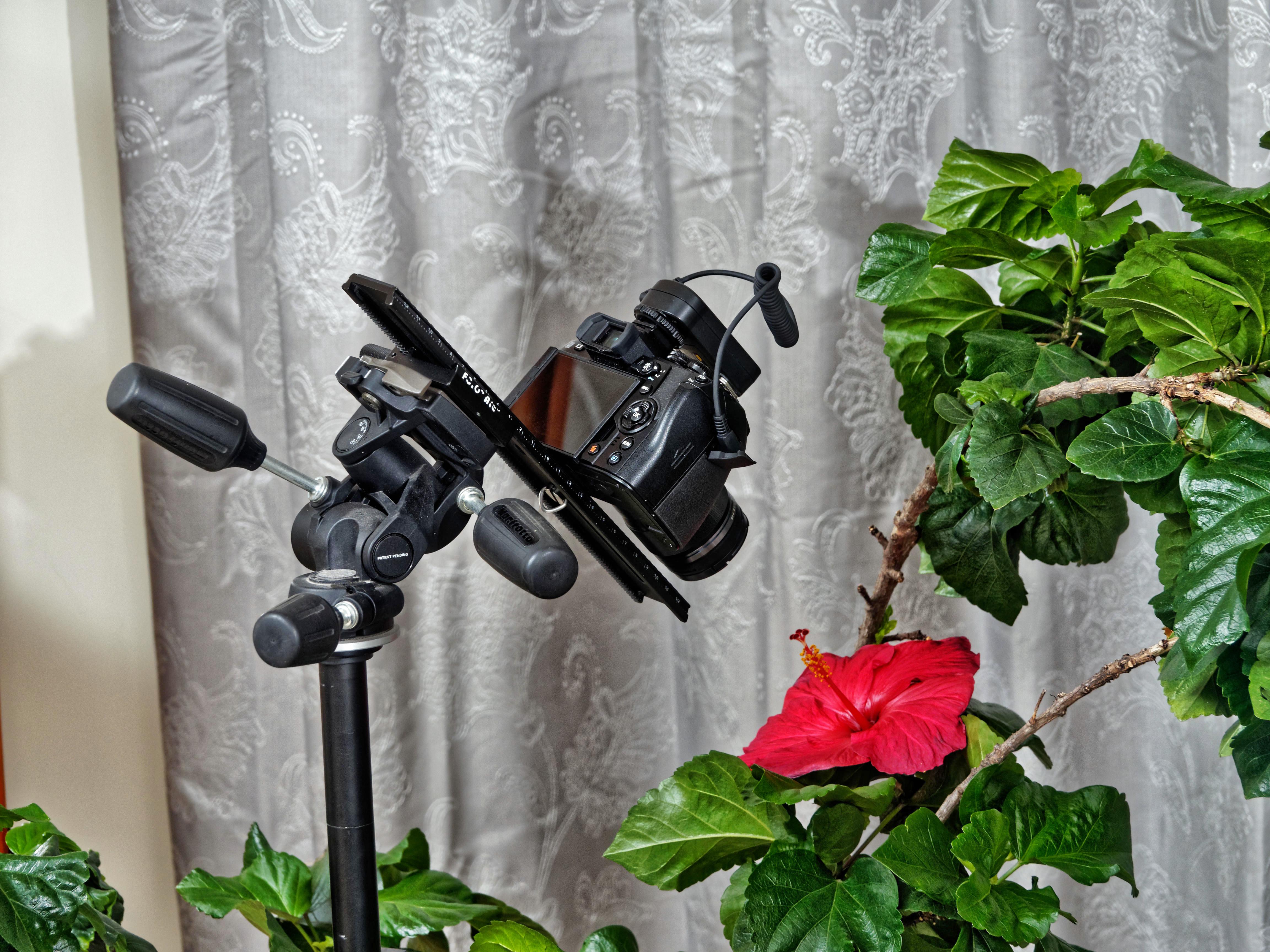 Hibiscus-11.jpeg