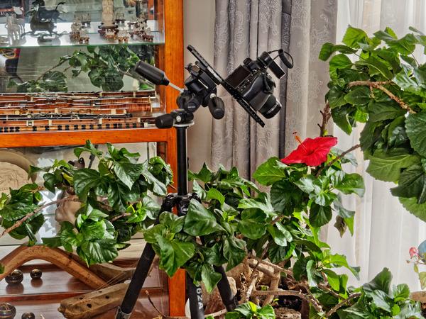 Hibiscus-8.jpeg