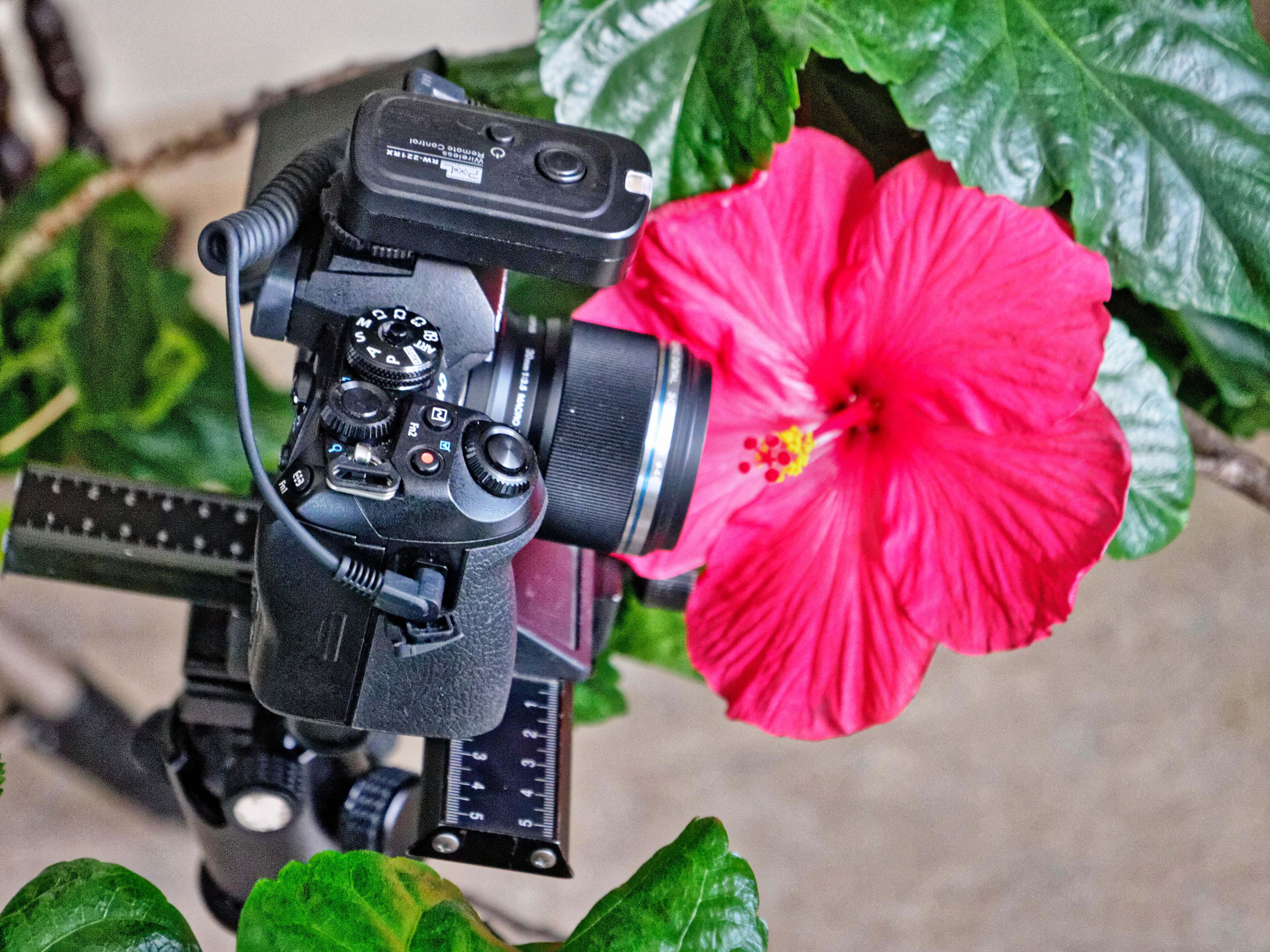 Hibiscus-photography-1.jpeg