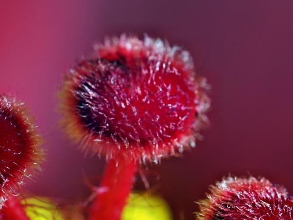 Hibiscus-9.jpeg