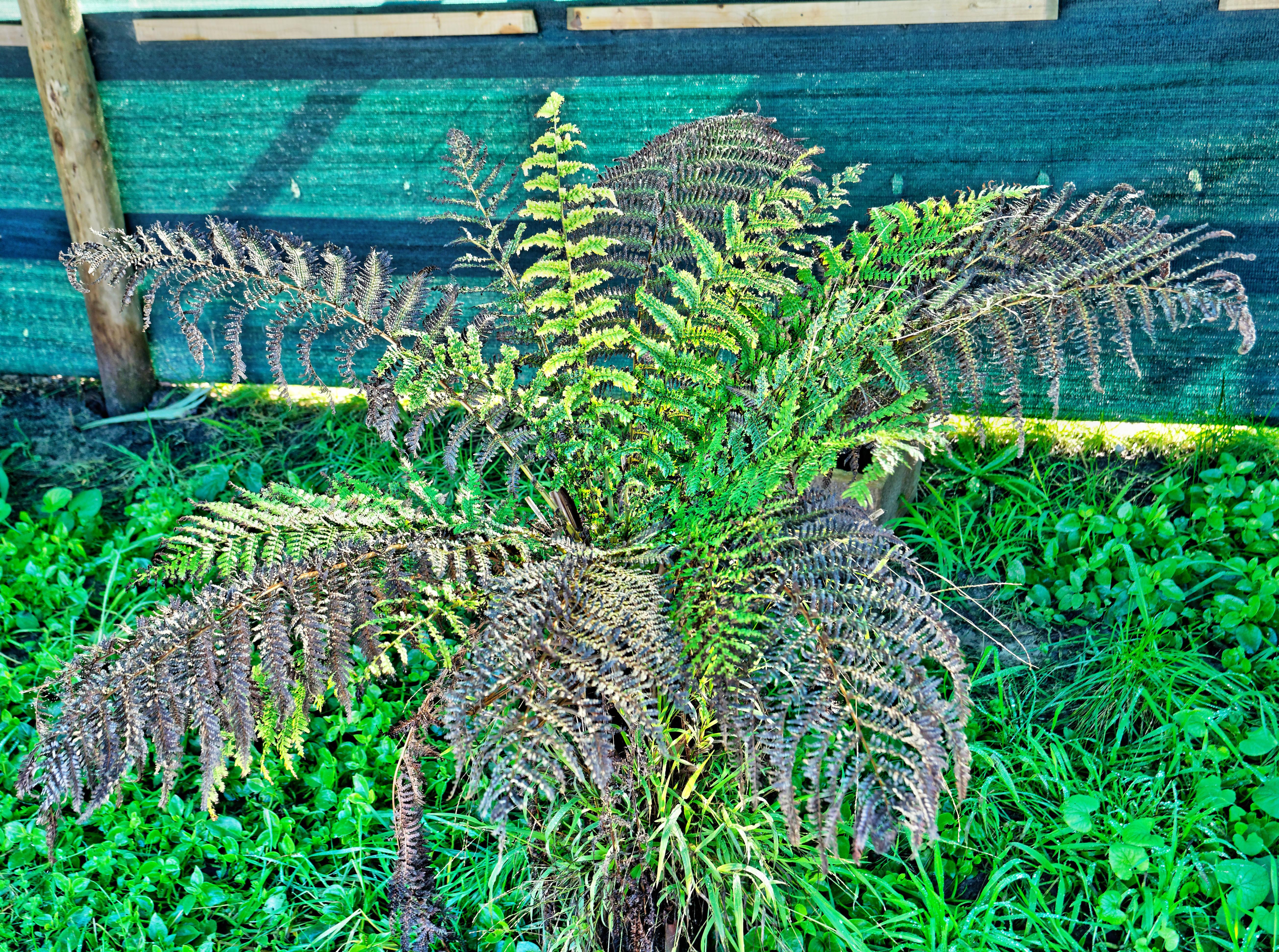 Tree-fern.jpeg