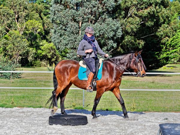 Sharryn-Yvonne-riding-101.jpeg