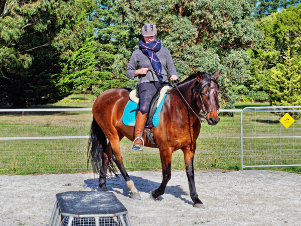 Sharryn-Yvonne-riding-102.jpeg