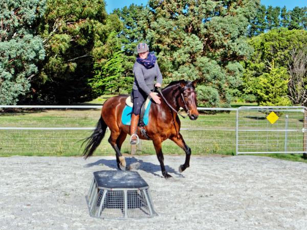 Sharryn-Yvonne-riding-112.jpeg