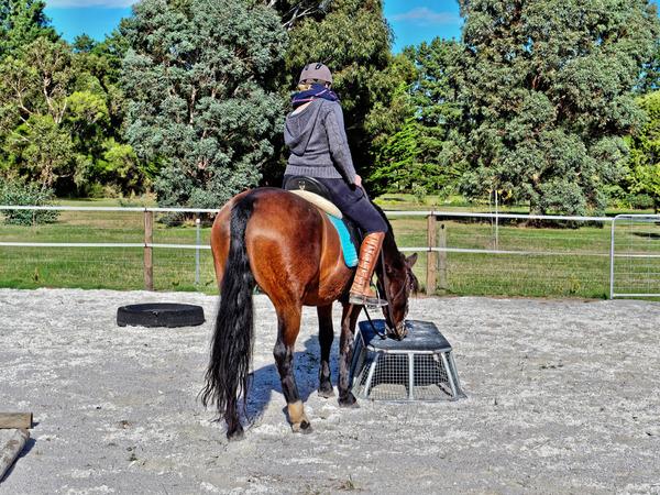 Sharryn-Yvonne-riding-46.jpeg