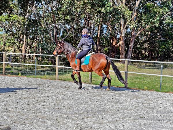 Sharryn-Yvonne-riding-52.jpeg