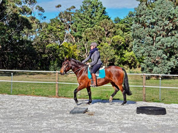 Sharryn-Yvonne-riding-64.jpeg