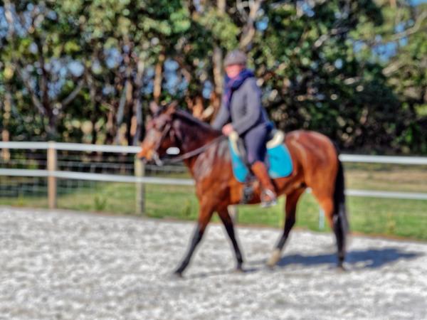 Sharryn-Yvonne-riding-65.jpeg