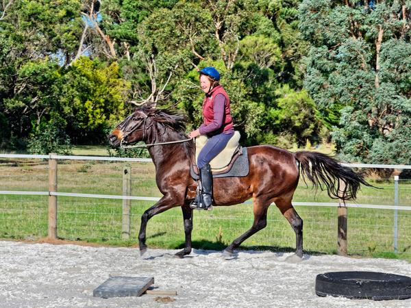 Sharryn-Yvonne-riding-67.jpeg