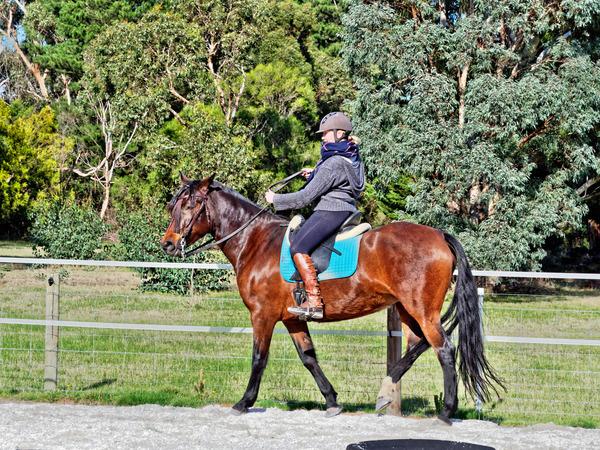Sharryn-Yvonne-riding-92.jpeg