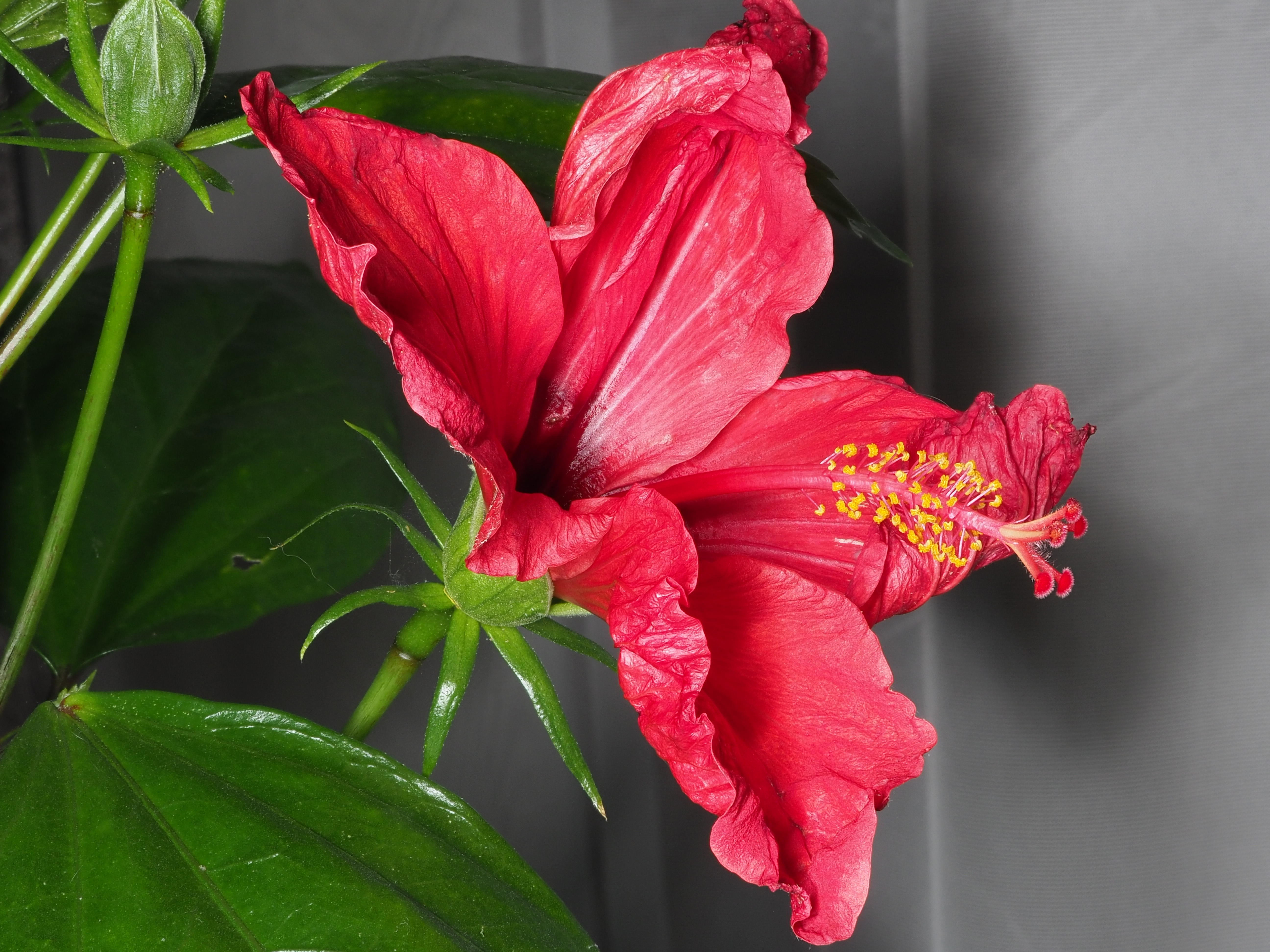 This should be Hibiscus-4.jpeg.  Is it missing?