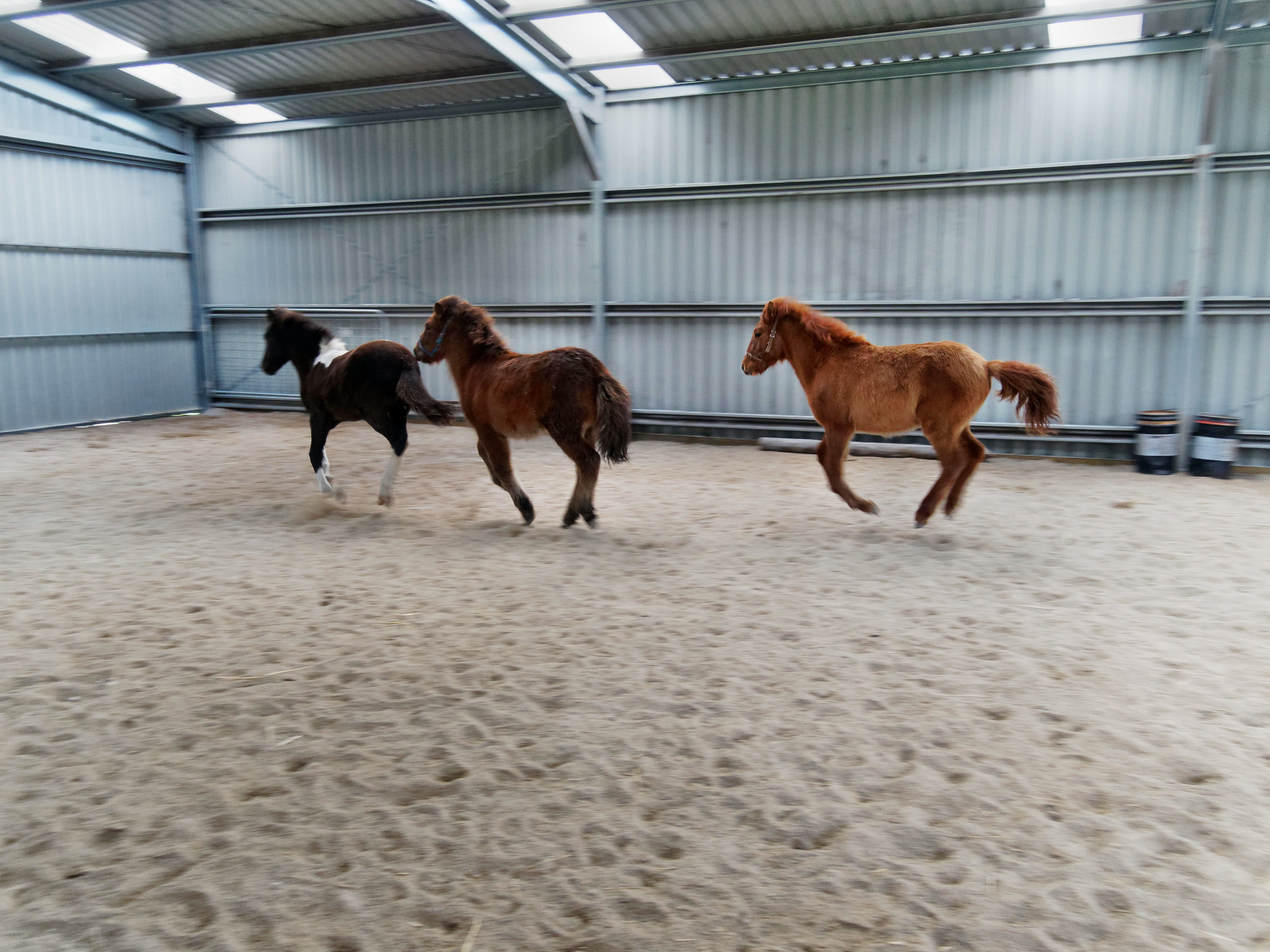 Horses-26.jpeg