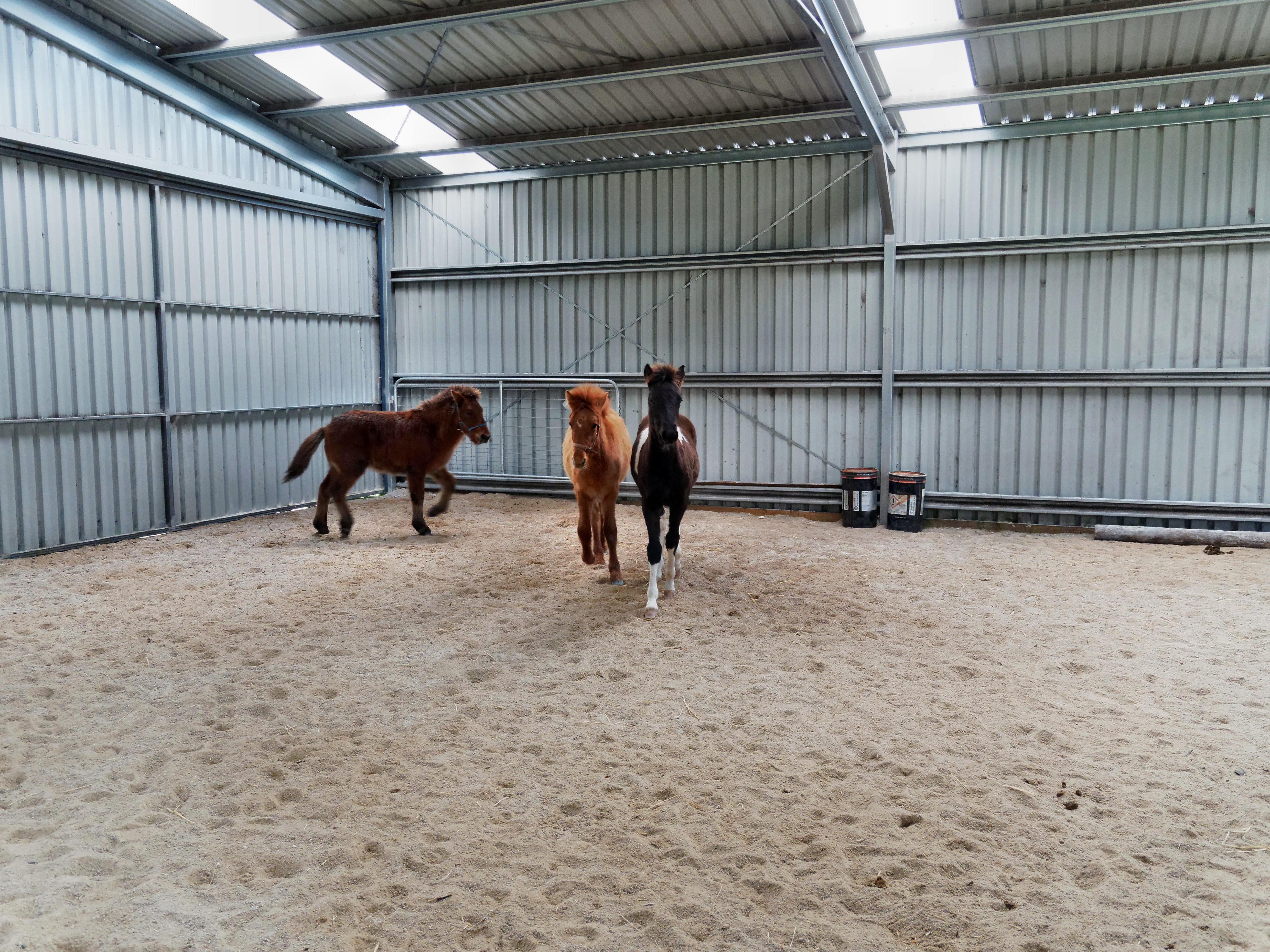 Horses-27.jpeg