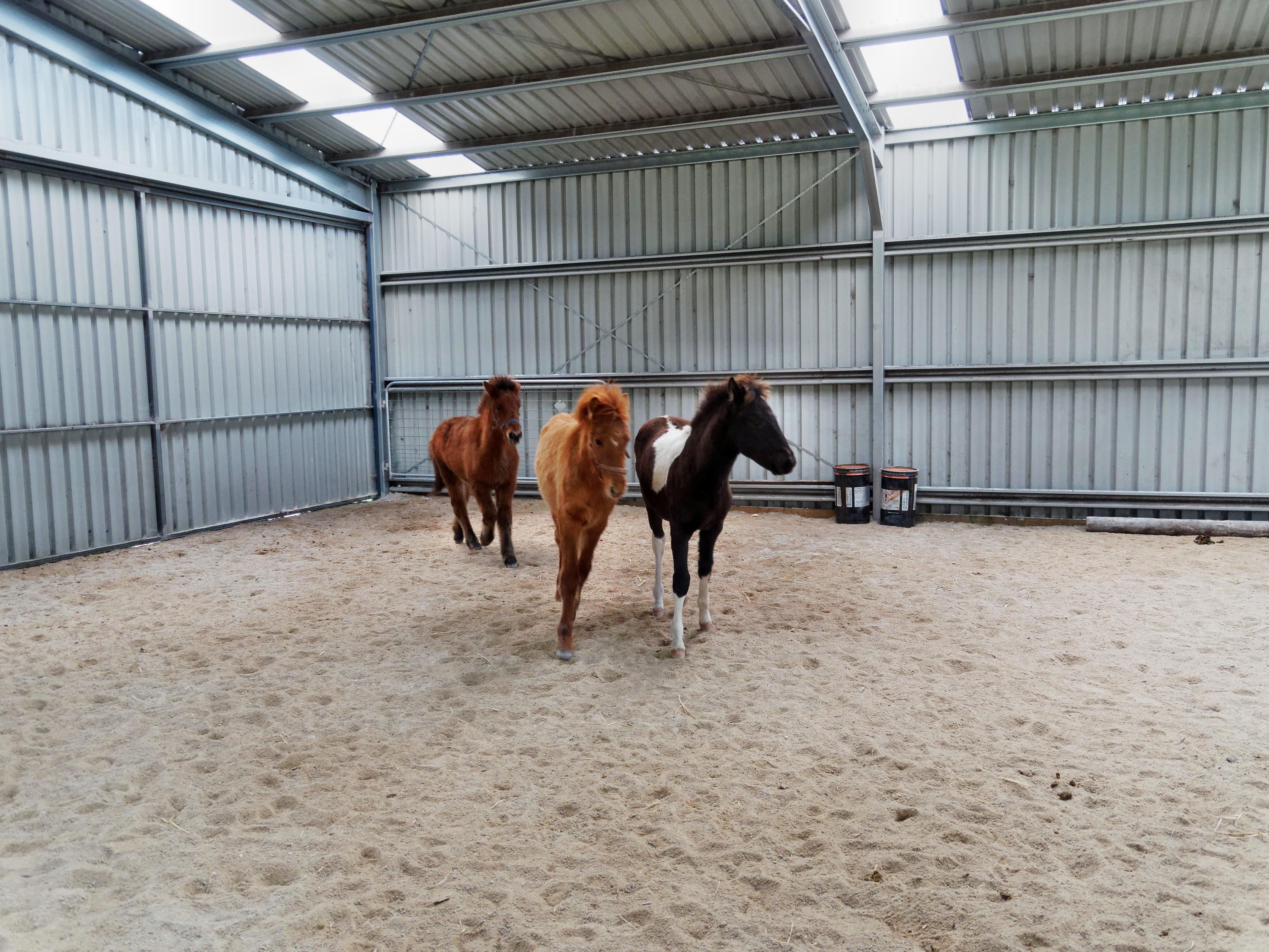 Horses-28.jpeg