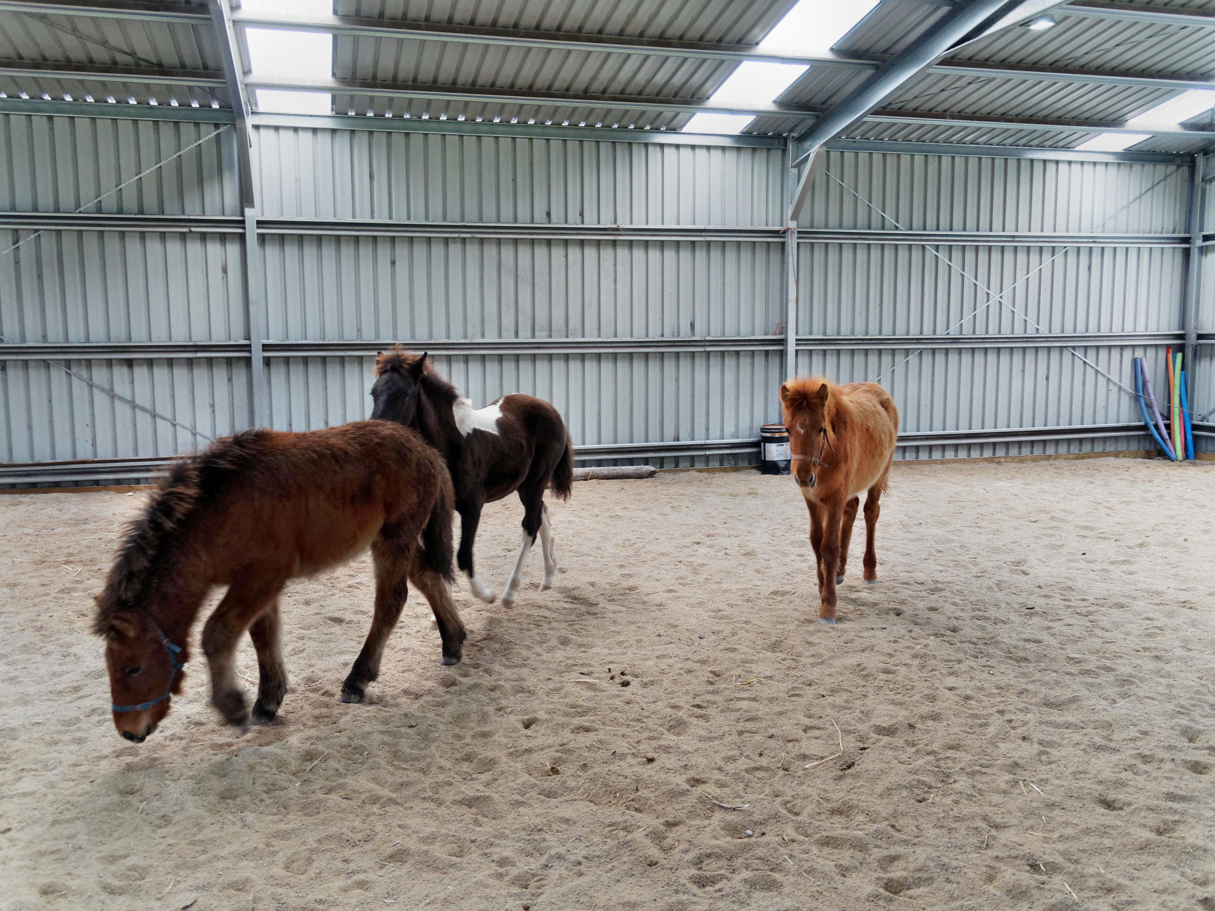 Horses-32.jpeg