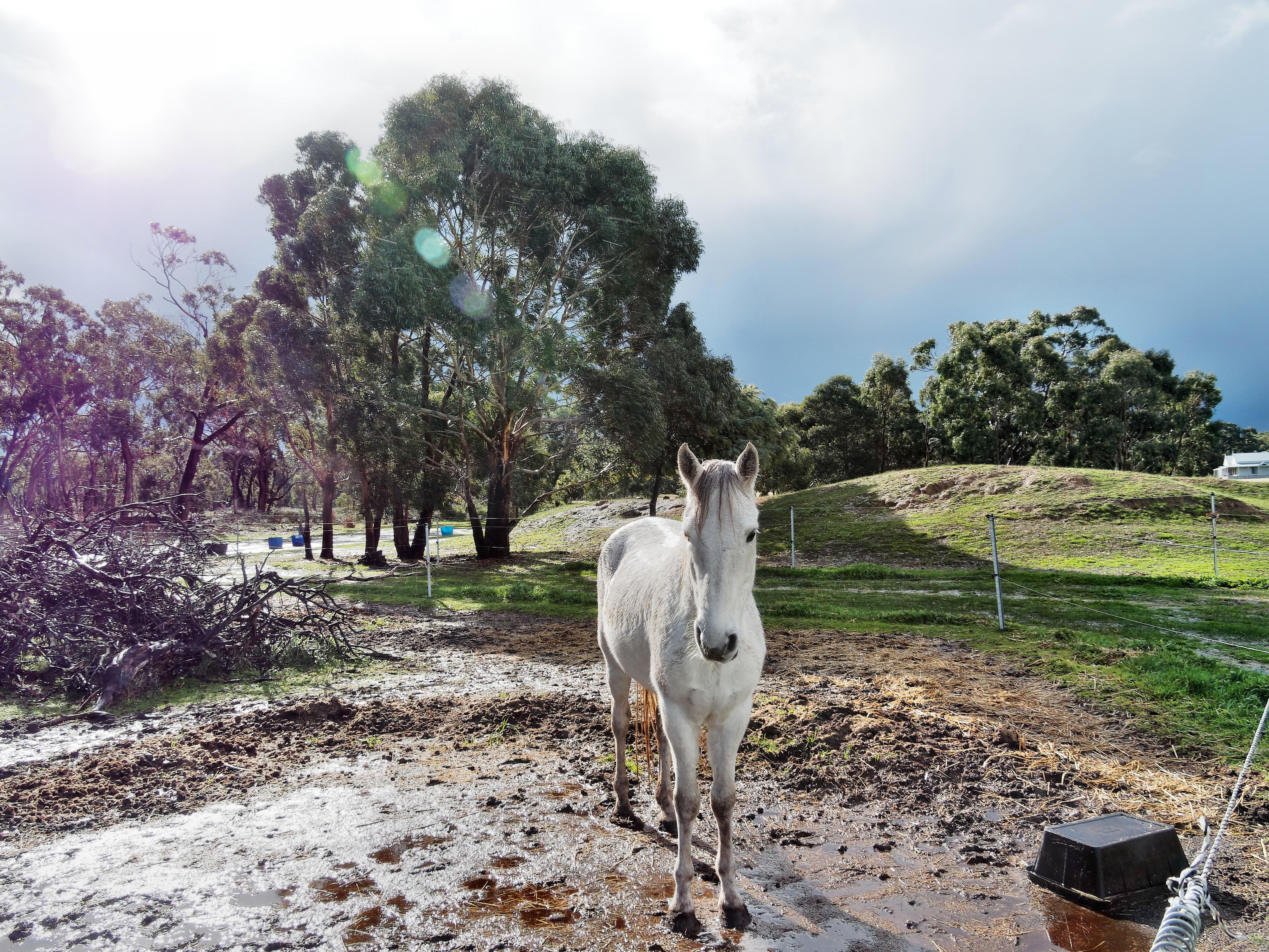 Horses-45.jpeg