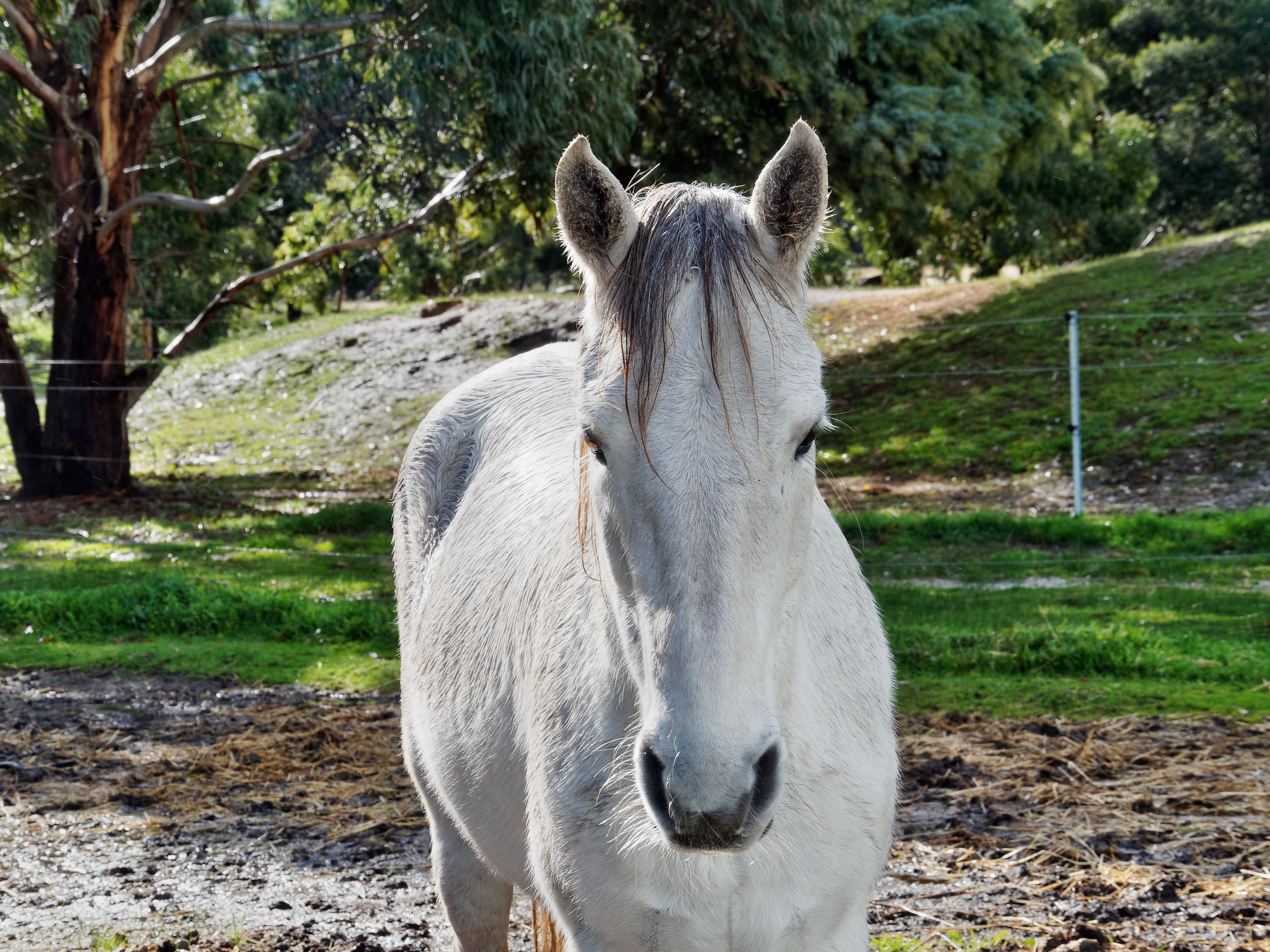 Horses-48.jpeg