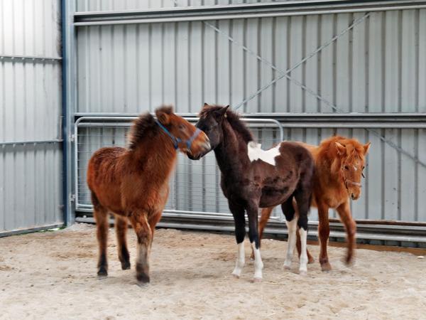 Horses-12.jpeg