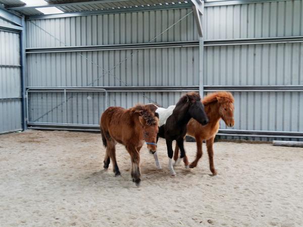 Horses-13.jpeg