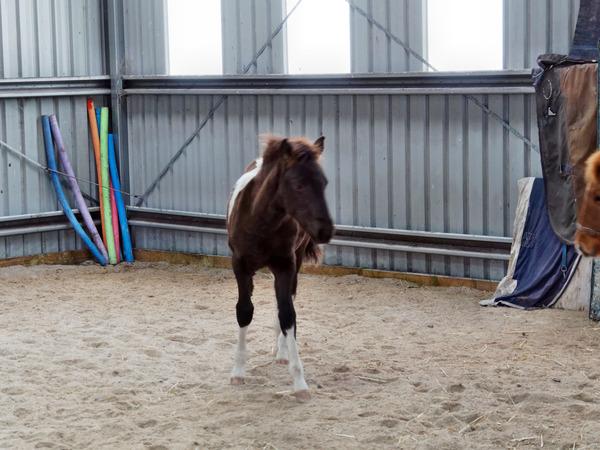 Horses-14.jpeg