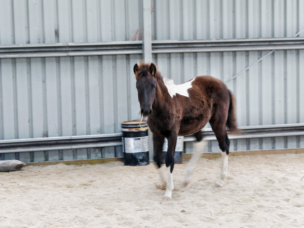 Horses-15.jpeg
