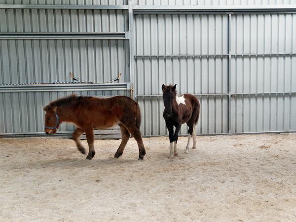 Horses-20.jpeg