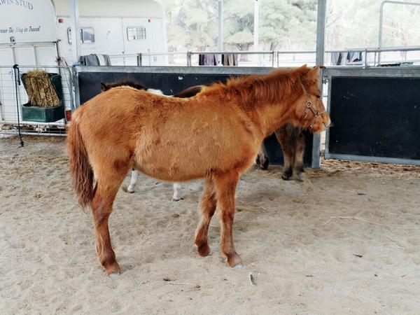 Horses-23.jpeg