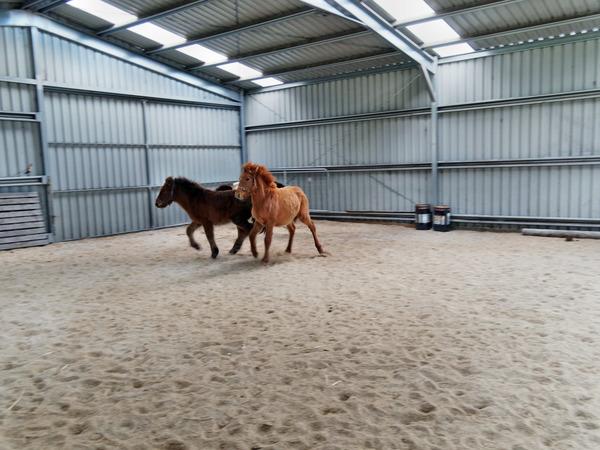 Horses-25.jpeg