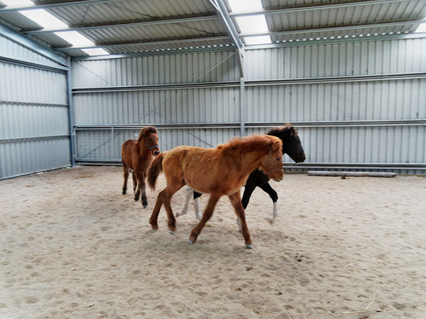 Horses-29.jpeg