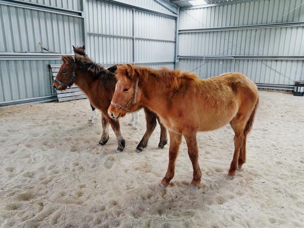 Horses-33.jpeg