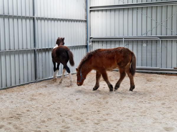 Horses-35.jpeg