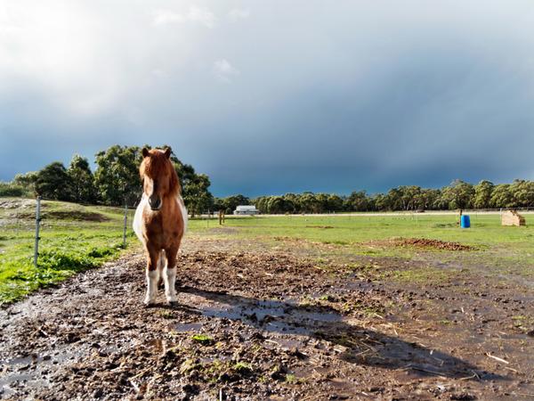 Horses-41.jpeg