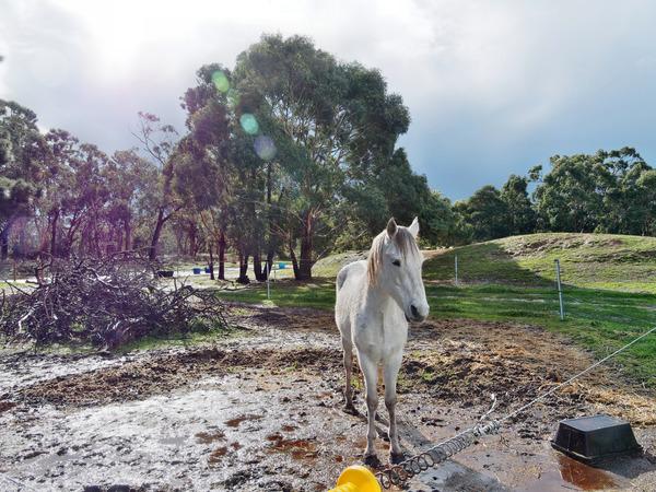 Horses-44.jpeg