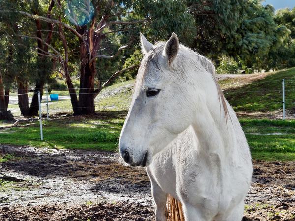 Horses-49.jpeg