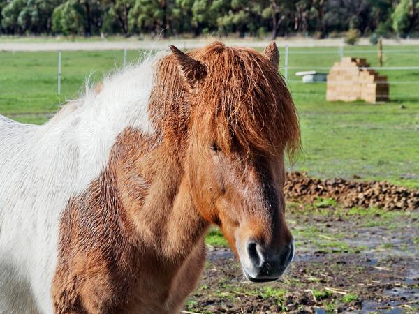 Horses-53.jpeg