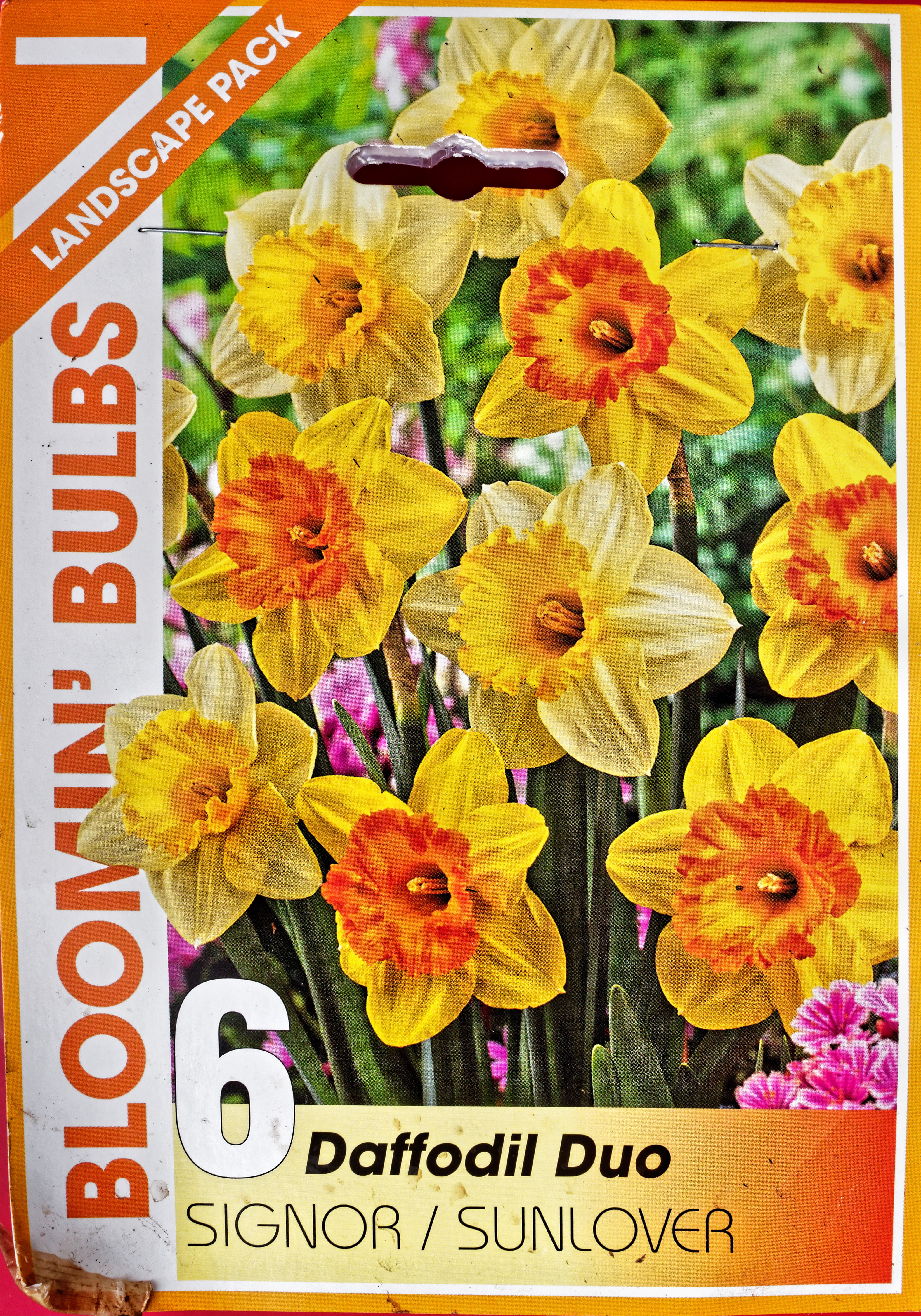 This should be Daffodil.jpeg.  Is it missing?