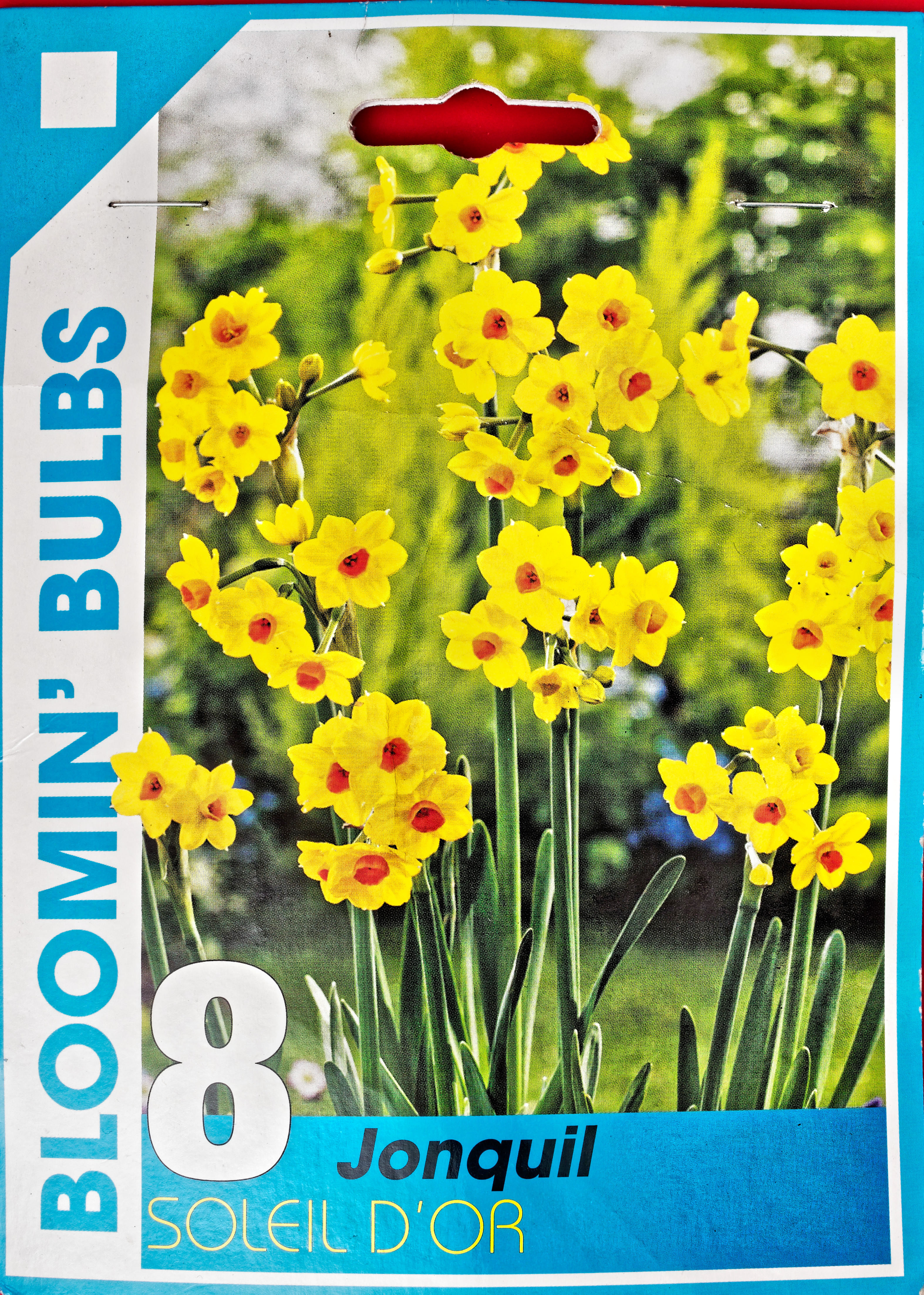This should be Daffodils-2.jpeg.  Is it missing?
