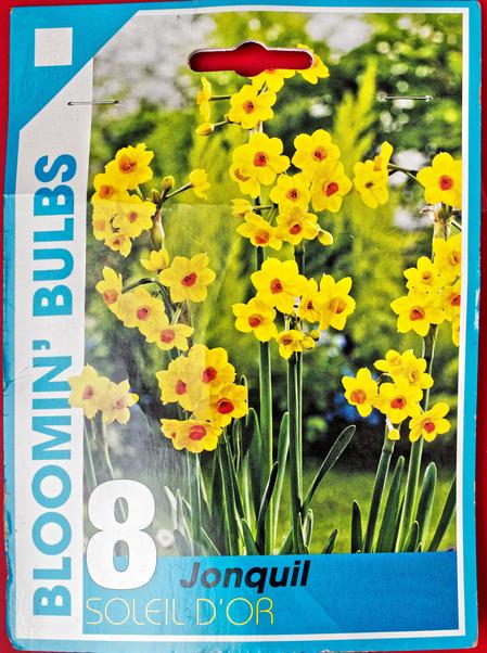 Daffodils-1.jpeg