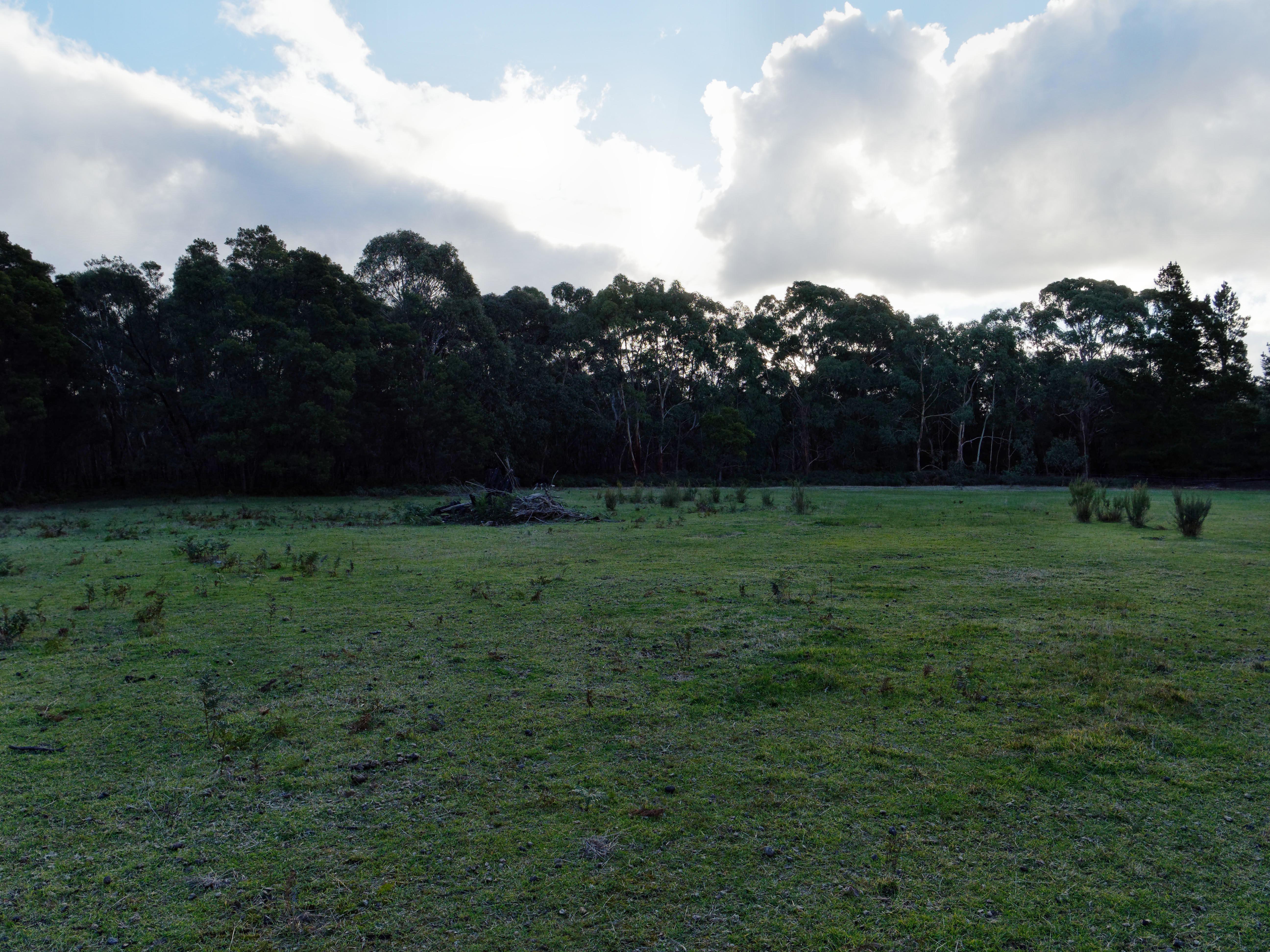 Forest-HDR1-JPEG-orig.jpeg